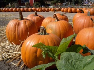 Elderly Care Durham, NC: Benefits of Pumpkins