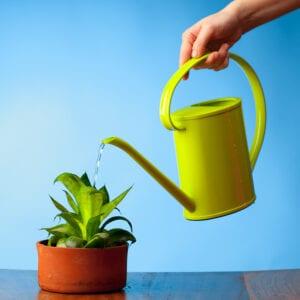Elder Care Durham, NC: Benefits of Indoor Plants